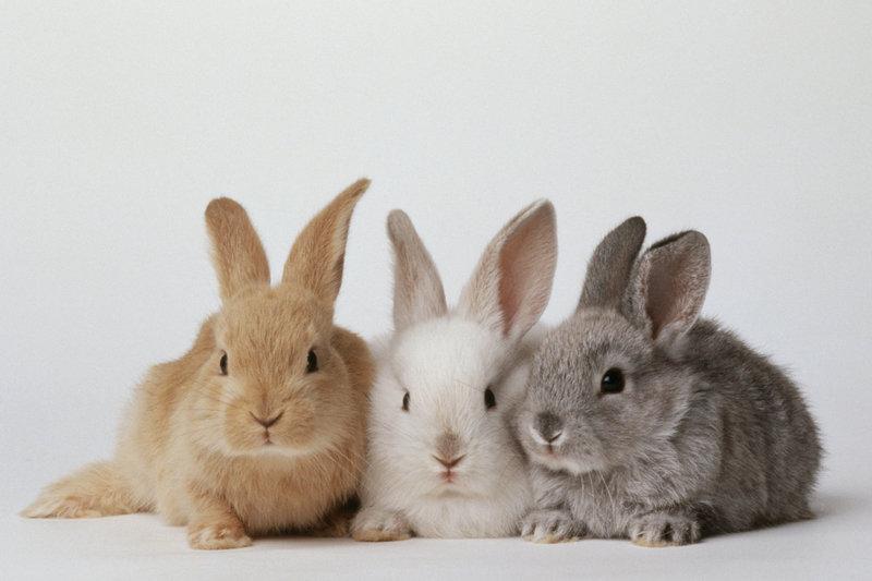 Идея для бизнеса: Разведение кроликов